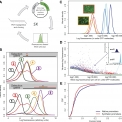Expression noise facilitates the evolution of gene regulation