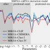 Quantifying the strength of miRNA–target interactions
