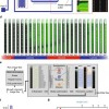 Monitoring single-cell gene regulation under dynamically controllable conditions with integrated microfluidics and software