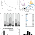 The genomic context and corecruitment of SP1 affect ERRα coactivation by PGC-1α in muscle cells